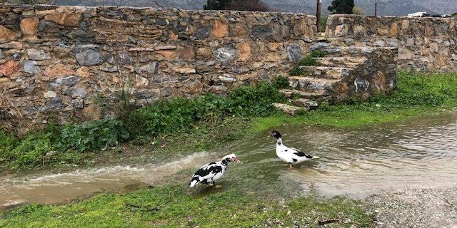 Ασταμάτητη η βροχή στην Αμοργό - Ρεκόρ βροχόπτωσης εχθές
