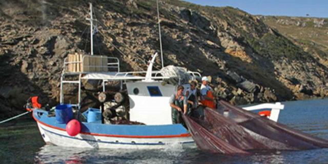 Νέο νομοσχέδιο για την Αλιεία, μεταξύ άλλων καταργούνται οι βιντζότρατες.