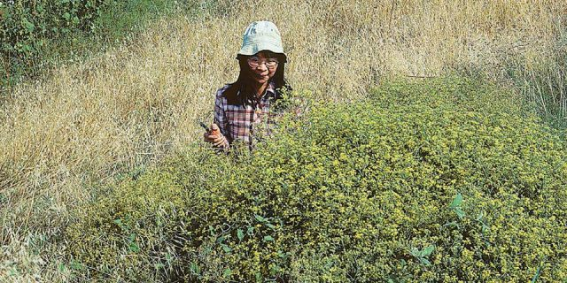Διεθνούς φήμης βοτανολόγος μελέτησε και έγραψε βιβλίο για την χλωρίδα της Αμοργού